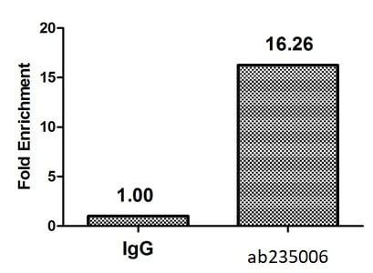 ChIP - Anti-Histone H4 (2-hydroxyisobutyryl K16) antibody (ab235006)