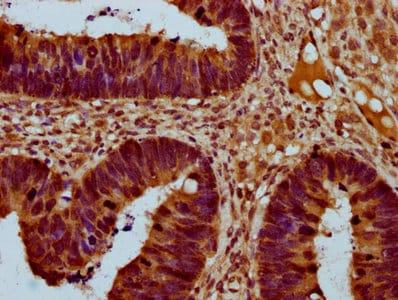 Immunohistochemistry (Formalin/PFA-fixed paraffin-embedded sections) - Anti-SOFAT antibody (ab235042)