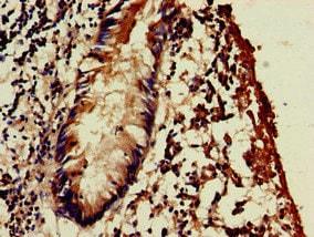 Immunohistochemistry (Formalin/PFA-fixed paraffin-embedded sections) - Anti-WSB1 antibody (ab235090)