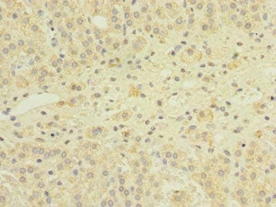 Immunohistochemistry (Formalin/PFA-fixed paraffin-embedded sections) - Anti-Gemin 8 antibody (ab235092)