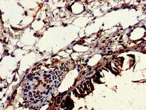 Immunohistochemistry (Formalin/PFA-fixed paraffin-embedded sections) - Anti-VPS16 antibody (ab235098)