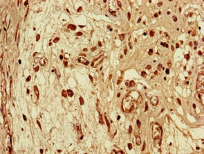 Immunohistochemistry (Formalin/PFA-fixed paraffin-embedded sections) - Anti-Sec14l3/TAP2 antibody (ab235110)