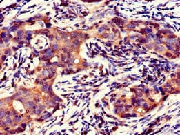Immunohistochemistry (Formalin/PFA-fixed paraffin-embedded sections) - Anti-GFRAL antibody (ab235111)