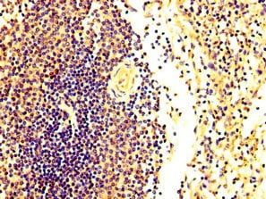 Immunohistochemistry (Formalin/PFA-fixed paraffin-embedded sections) - Anti-FASTKD2 antibody (ab235113)