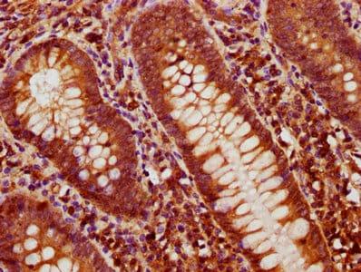 Immunohistochemistry (Formalin/PFA-fixed paraffin-embedded sections) - Anti-BMP4 antibody (ab235114)