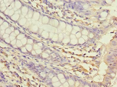 Immunohistochemistry (Formalin/PFA-fixed paraffin-embedded sections) - Anti-USP30 antibody (ab235299)