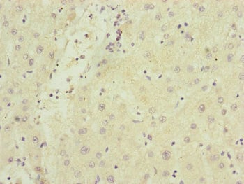 Immunohistochemistry (Formalin/PFA-fixed paraffin-embedded sections) - Anti-SAMM50/SAM50 antibody (ab235308)