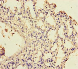 Immunohistochemistry (Formalin/PFA-fixed paraffin-embedded sections) - Anti-WDR54 antibody (ab235315)