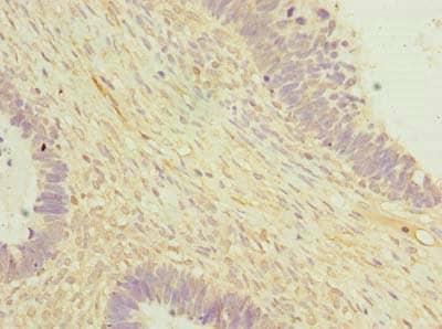 Immunohistochemistry (Formalin/PFA-fixed paraffin-embedded sections) - Anti-OTUD6B antibody (ab235326)