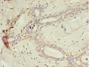 Immunohistochemistry (Formalin/PFA-fixed paraffin-embedded sections) - Anti-C2ORF47/MAIP1 antibody (ab235344)