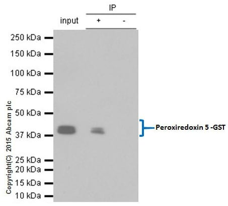 Immunoprecipitation - Anti-GST antibody [EPR4236] - BSA and Azide free (ab235384)