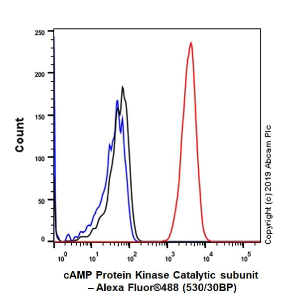 Flow Cytometry - Anti-cAMP Protein Kinase Catalytic subunit antibody [EP2102Y] - BSA and Azide free (ab235385)