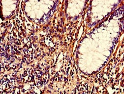 Immunohistochemistry (Formalin/PFA-fixed paraffin-embedded sections) - Anti-Nrip2 antibody (ab235405)