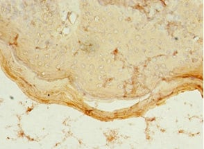 Immunohistochemistry (Formalin/PFA-fixed paraffin-embedded sections) - Anti-PDZD3 antibody (ab235412)