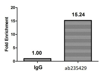 ChIP - Anti-Histone H2B (butyryl K5) antibody (ab235429)