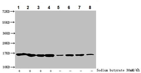 Western blot - Anti-Histone H2B (butyryl K5) antibody (ab235429)