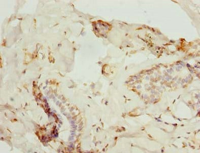 Immunohistochemistry (Formalin/PFA-fixed paraffin-embedded sections) - Anti-ZNF232 antibody (ab235437)