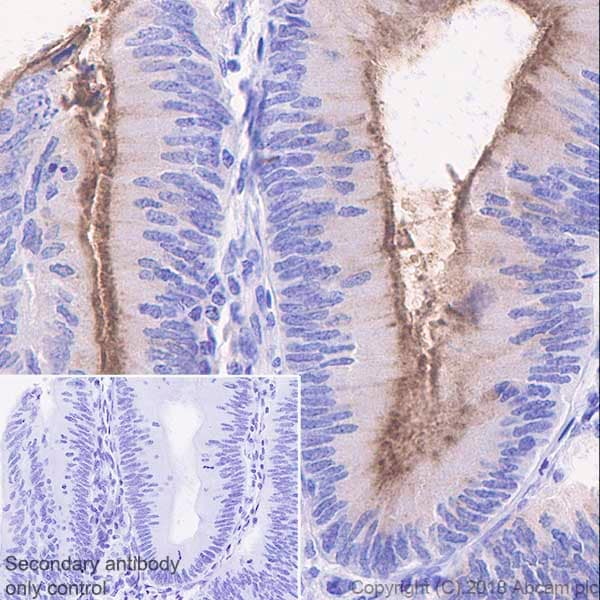 Immunohistochemistry (Formalin/PFA-fixed paraffin-embedded sections) - Anti-MUC13 antibody [EPR21901] (ab235450)