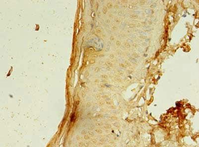 Immunohistochemistry (Formalin/PFA-fixed paraffin-embedded sections) - Anti-CCDC24 antibody (ab235512)
