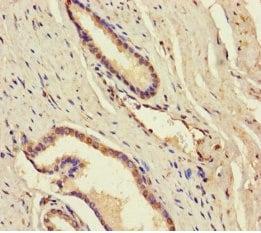 Immunohistochemistry (Formalin/PFA-fixed paraffin-embedded sections) - Anti-DDX19A antibody (ab235531)