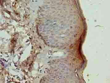 Immunohistochemistry (Formalin/PFA-fixed paraffin-embedded sections) - Anti-TRA16 antibody (ab235543)