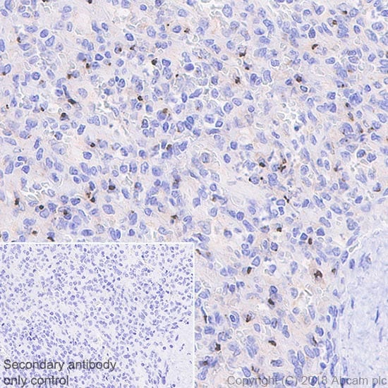 Immunohistochemistry (Formalin/PFA-fixed paraffin-embedded sections) - Anti-AICL antibody [EPR22061] - BSA and Azide free (ab235626)