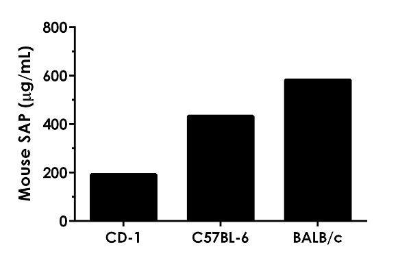 Serum samples from three strains of mice were measured in duplicate.