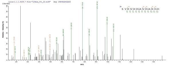 Mass Spectrometry - Recombinant Human Laminin alpha 5/LAMA5 protein (Tagged) (ab235807)