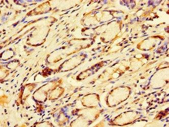 Immunohistochemistry (Formalin/PFA-fixed paraffin-embedded sections) - Anti-DP2 antibody (ab235830)