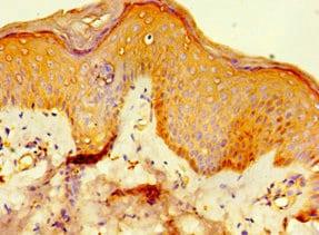 Immunohistochemistry (Formalin/PFA-fixed paraffin-embedded sections) - Anti-Viperin antibody (ab235895)