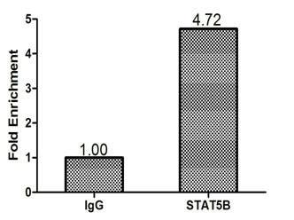 ChIP - Anti-STAT5b antibody (ab235934)