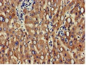 Immunohistochemistry (Formalin/PFA-fixed paraffin-embedded sections) - Anti-CD166 antibody (ab235957)