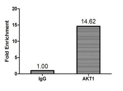 ChIP - Anti-AKT1 antibody (ab235958)