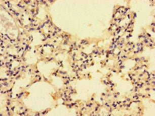 Immunohistochemistry (Formalin/PFA-fixed paraffin-embedded sections) - Anti-CCL4/MIP-1 beta antibody (ab235961)
