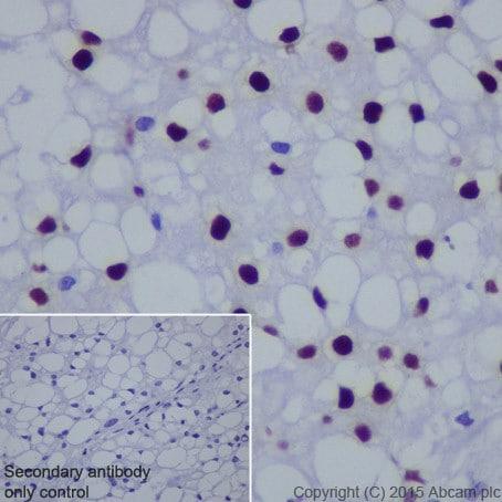 Immunohistochemistry (Formalin/PFA-fixed paraffin-embedded sections) - Anti-Brachyury / Bry antibody [EPR18113] - BSA and Azide free (ab236023)