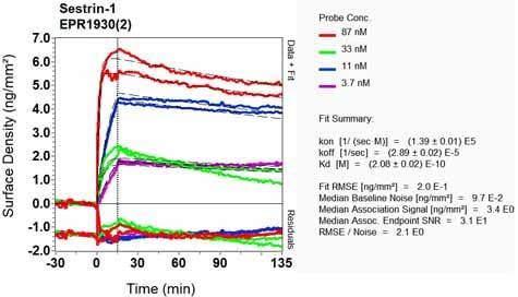 Other - Anti-SESN1 antibody [EPR1930(2)] - BSA and Azide free (ab236027)