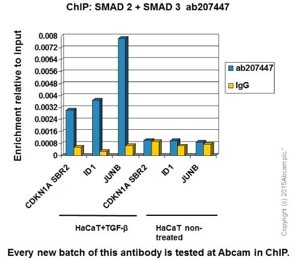 ChIP - Anti-Smad2 + Smad3 antibody [EPR19557] - BSA and Azide free (ab236030)