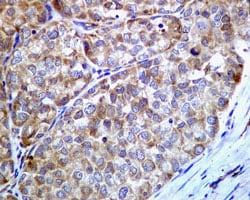 Immunohistochemistry (Formalin/PFA-fixed paraffin-embedded sections) - Anti-GRP78 BiP antibody [EPR4041(2)] - BSA and Azide free (ab236050)