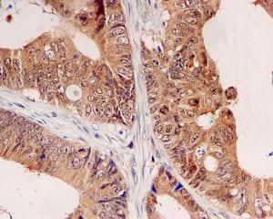 Immunohistochemistry (Formalin/PFA-fixed paraffin-embedded sections) - Anti-UBE2M/UBC12 antibody [EPR5333] - BSA and Azide free (ab236056)