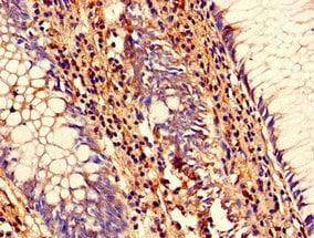 Immunohistochemistry (Formalin/PFA-fixed paraffin-embedded sections) - Anti-SENP1 antibody (ab236094)