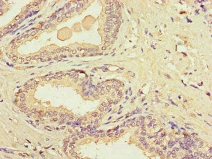 Immunohistochemistry (Formalin/PFA-fixed paraffin-embedded sections) - Anti-MTCO1 antibody (ab236105)