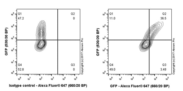 Flow Cytometry - Anti-GFP antibody [EPR14104-89] - BSA and Azide free (ab236117)