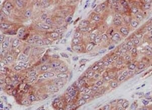 Immunohistochemistry (Formalin/PFA-fixed paraffin-embedded sections) - Anti-TREX1 antibody [EPR14985] - BSA and Azide free (ab236140)