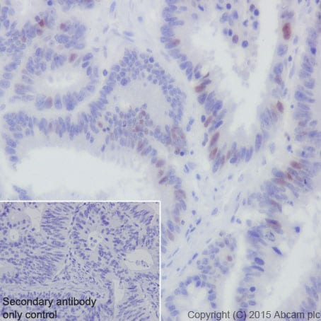 Immunohistochemistry (Formalin/PFA-fixed paraffin-embedded sections) - Anti-CDT1/DUP antibody [EPR17891] - BSA and Azide free (ab236152)
