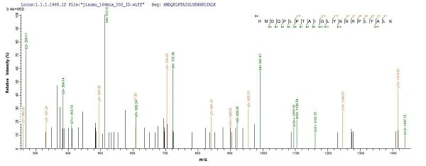 Mass Spectrometry - Recombinant Human XPC protein (His tag) (ab236173)