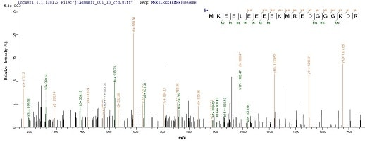 Mass Spectrometry - Recombinant Human RRP2 protein (His tag) (ab236185)