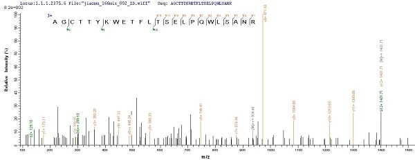 Mass Spectrometry - Recombinant Diacylglycerol acyltransferase/mycolyltransferase Ag85B protein (Tagged) (ab236191)