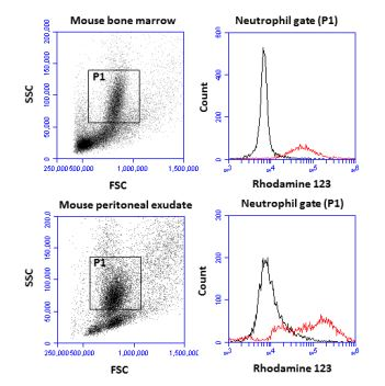 Flow cytometric analysis of mouse neutrophil respiratory burst
