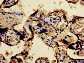 Immunohistochemistry (Formalin/PFA-fixed paraffin-embedded sections) - Anti-Fos B antibody (ab236257)