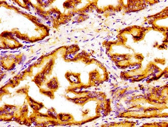 Immunohistochemistry (Formalin/PFA-fixed paraffin-embedded sections) - Anti-GOLPH3/MIDAS antibody (ab236296)